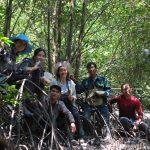 Sinh thai - Nghien cuu RNM Can Gio sau bao Durian